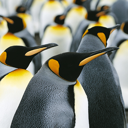 contact-pinguins