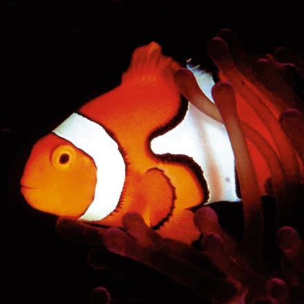 productie-vis